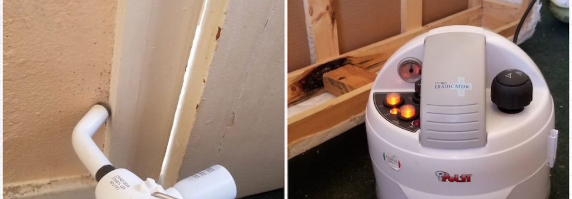 Green Bed Bug Control