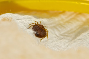 bed bug service in Ventura