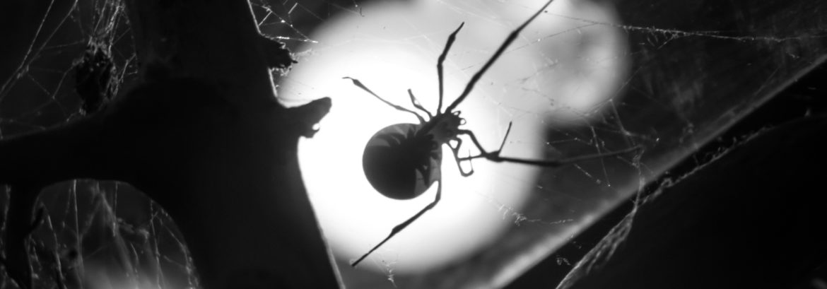 The Unique Challenges of Widow Spider Control in Ventura County