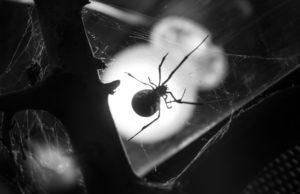pest control companies in Ventura