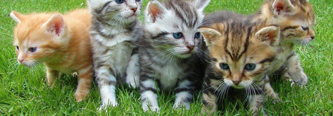 Pesticide Safety and Your Pets