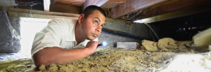 pest services in Ventura and bed bug treatment experts